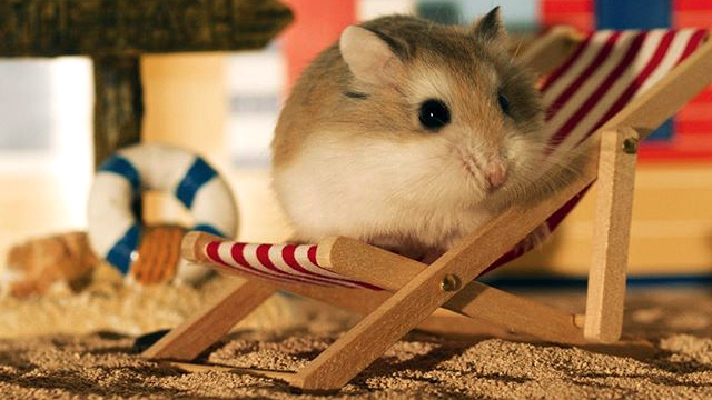 Helping Your Hamster Live A Long Life 13 May 2016 Pet Blog Veterinary Tips What marketing strategies does hamsterlive use? veterinary tips ucoz