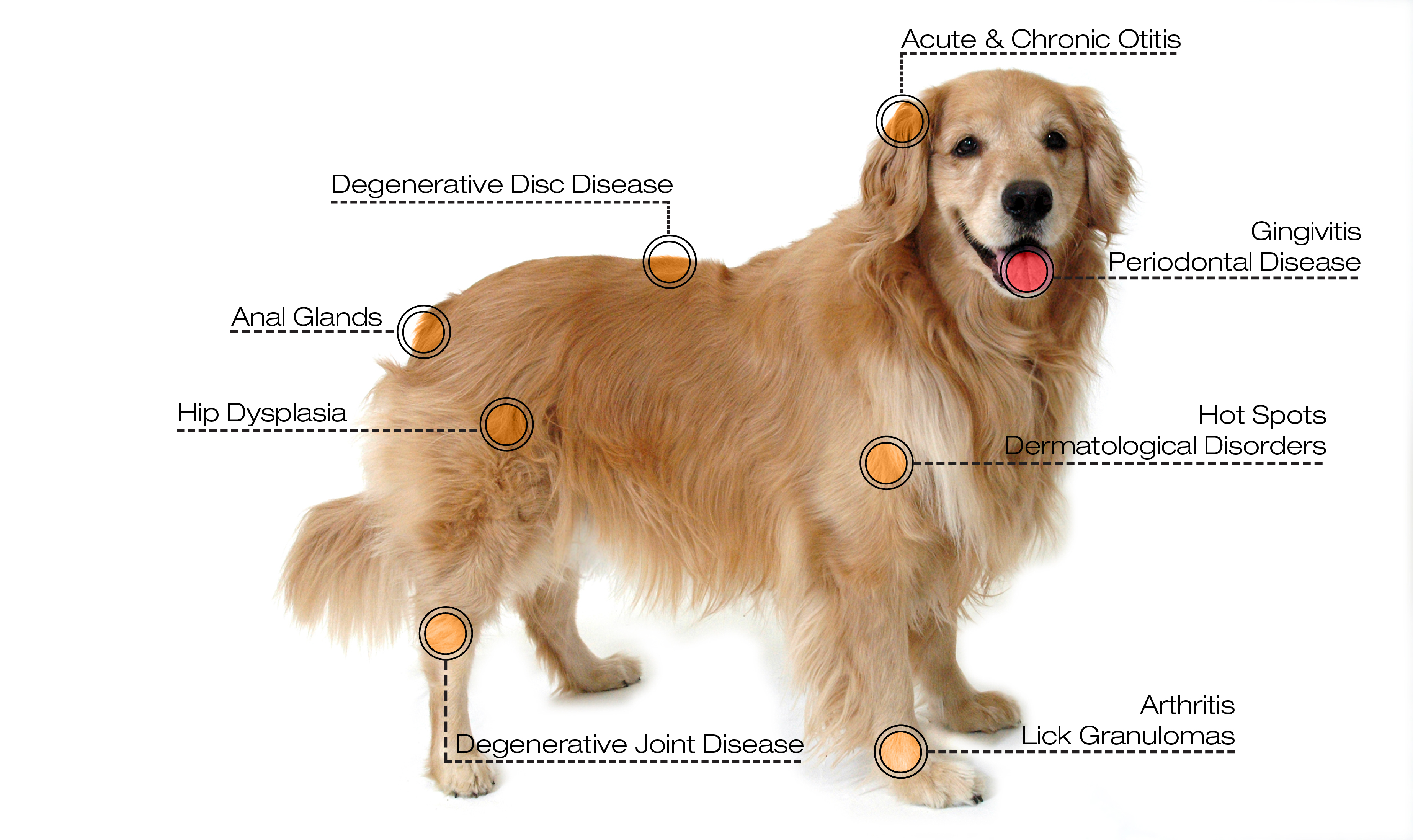 What Can I Give My Dog For Ear Pain