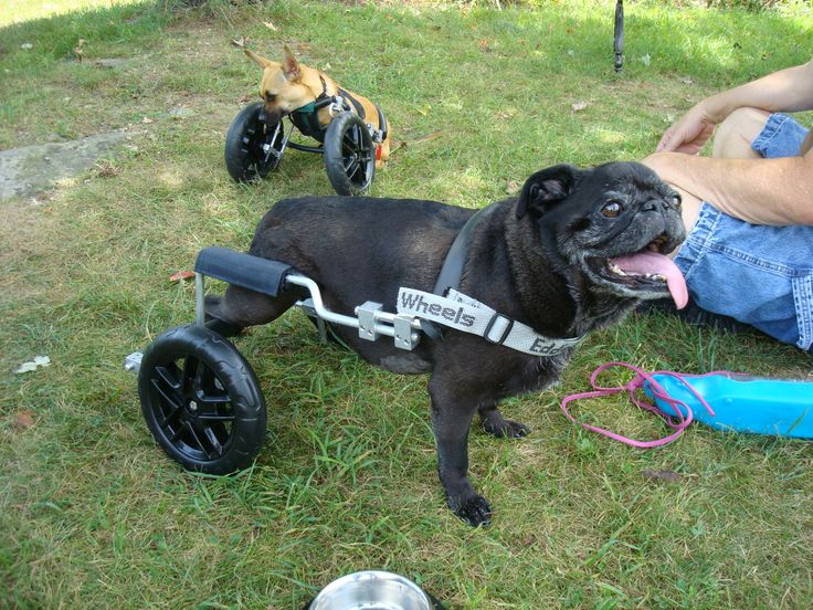 Pictures Of Dog Wheelchairs